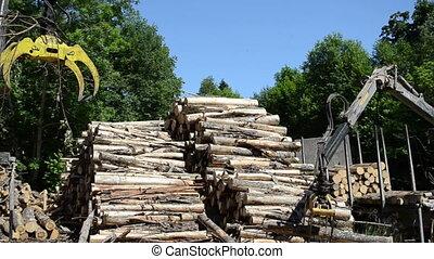 man load log transport - Man loading fell tree logs with...