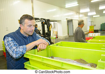 Man looking at crate of fish