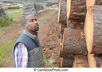 Man looking at felled tree trunks