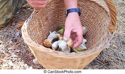 man makes forest mushrooms in a basket, seasonal specifics