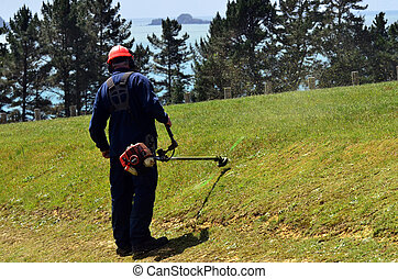 Man mowing a lawn with weedeater - Man mowing a long, ...