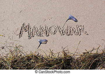 Man O War Beach Warning with Grass - A beach warning with...
