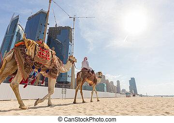 Man offering camel ride on Jumeirah beach, Dubai, United Arab Emirates.