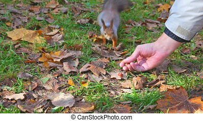 man offers a nut to a squirrel, she takes and escapes