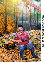 Man on corn cobs pile