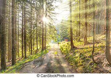 Man on road in the green forest