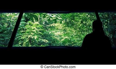 Man On Vehicle Traveling Through Jungle - Man looks out from...