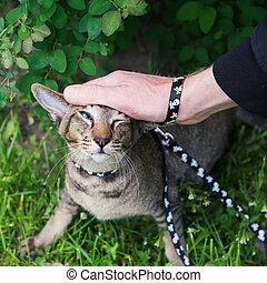 man pets the cat