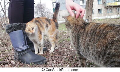 Man Petting Stray Cats on the Streets