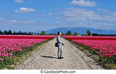 Man photographer at colourful tulip fields.