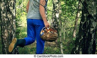 Man pick mushroom and put it in basket near birch tree trunk