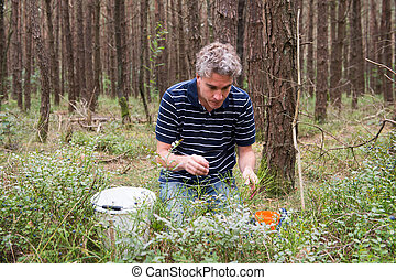 Man picking blueberries in the forest
