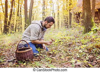 Man picking mushrooms - Young man picking mushrooms in...