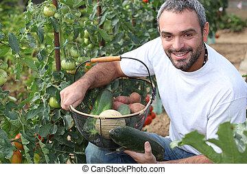Man picking tomatoes