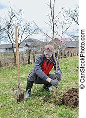 Man planting a tree.