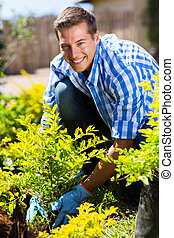 man planting shrub in garden - happy man planting shrub in...