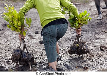 man planting tree - man walking in mud for planting young...