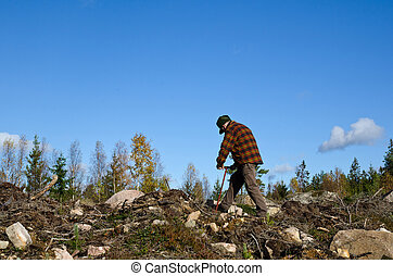 Man plants pine trees in a clear cut area