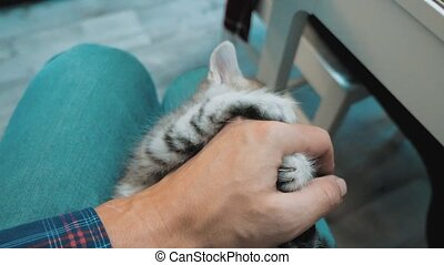 man playing with a kitten with his hand on his lap. little...