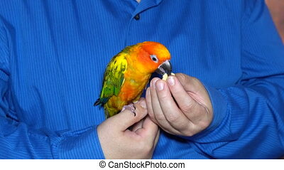 Man playing with his parrot holding colorful - Man playing...