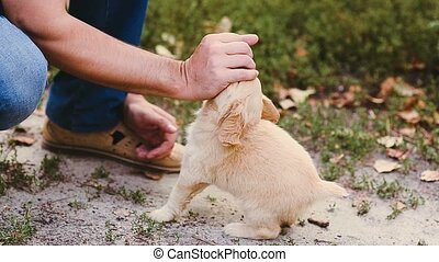 Man plays with a puppy