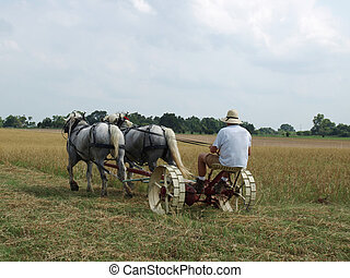 Man Ploughing the fields - Man ploughing the field with a...