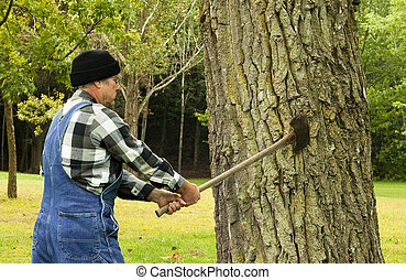 man preparing to chop down tree