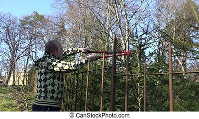 man pruning fir branch with gardener clipper over fence . 4K