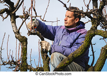 Man pruning tree brunch with pruning shears - gardener...