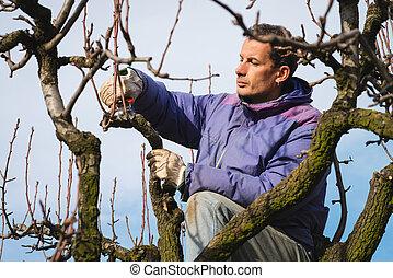 Man pruning tree brunch with pruning shears - gardener...