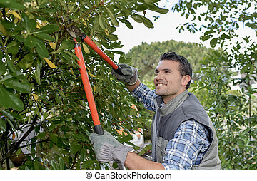 Man pruning tree with secateurs