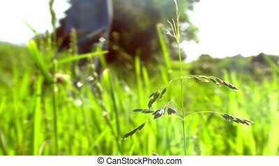Man pushing a lawn mower, close up on grass in foreground -...