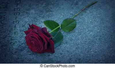 Man Puts Rose On Grave In The Evening - Man places red rose ...