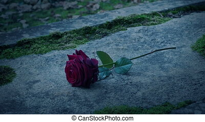 Close-up shot of a man's hand placing rose on grave stone