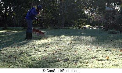 Man rake leaves in beautiful garden at cold autumn time morning. 4K