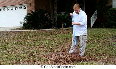Man Rakes Leaves - Homeowner man rakes leaves in the yard...
