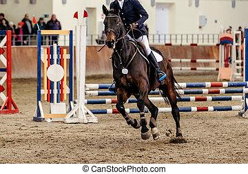 man rider equestrian in horse