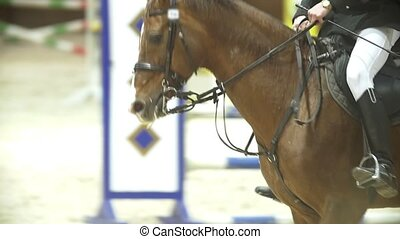 Man rider on stallion jumping over hurdle at show jumping...