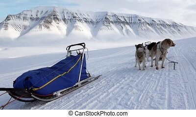 Man riding dog sled team husky Eskimo white snowy road of North Pole in Arctic.