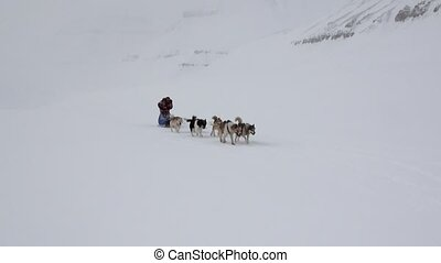 Man riding dog sled team on white snowy road of North Pole in Arctic.