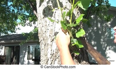 Man Sawing Branches Off of Tree