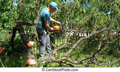 Man sawing fallen tree branches with chainsaw in his garden....