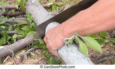 Man sawing old tree, speed up - Man using hand saw to cut...