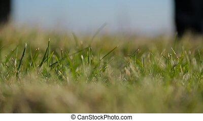 Man sets a golf ball on a lawn close up