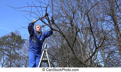 man shearing tree branch with pruning shears in spring time. 4K