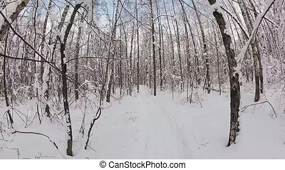Man skiing in a winter forest. POV view