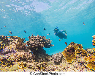 Man snorkeling underwater on a reef with soft coral and tropical fish