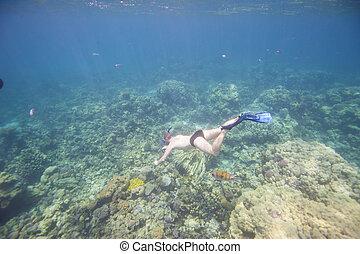 Man snorkeling underwater on coral reef