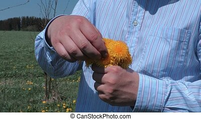 Man sorting dandelion bouquet