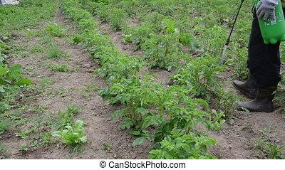 man spray potato field